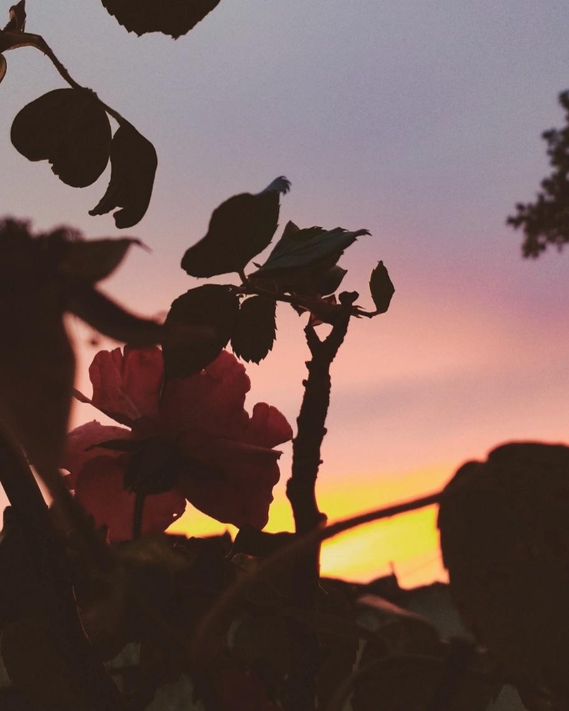 el anochecer de las flores